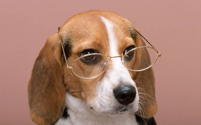 20-cute-dogs-with-glasses-007