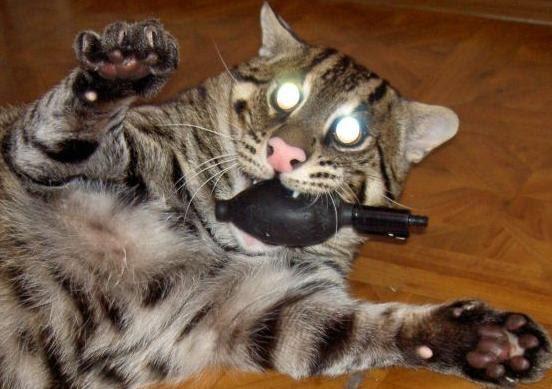 Funny Cats: Evil Cat